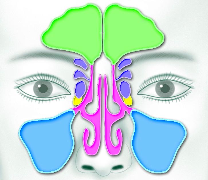 The Sinus Area
